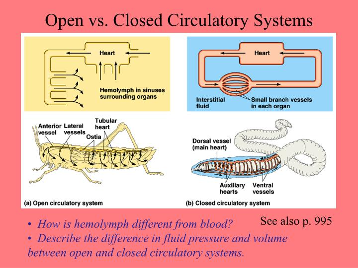 Open vs. Closed Circulatory Systems