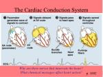 the cardiac conduction system