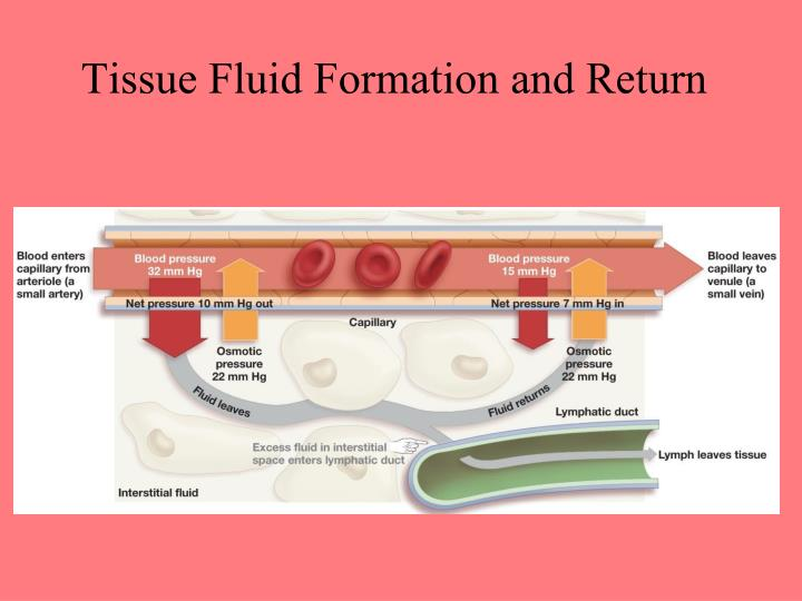 Tissue Fluid Formation and Return