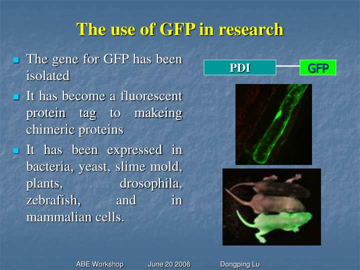 The use of GFP in research