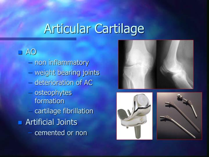 Articular Cartilage