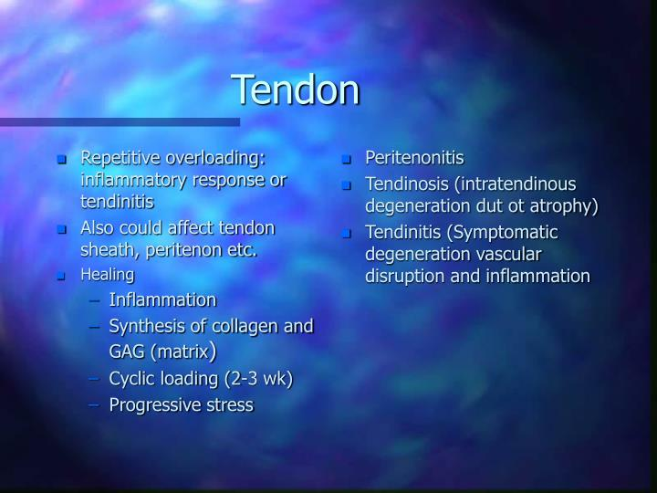Repetitive overloading: inflammatory response or tendinitis