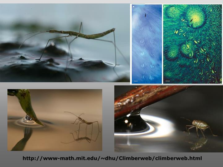 http://www-math.mit.edu/~dhu/Climberweb/climberweb.html