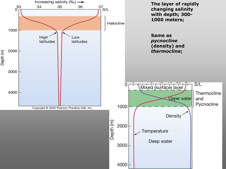The layer of rapidly changing salinity with depth; 300-1000 meters;