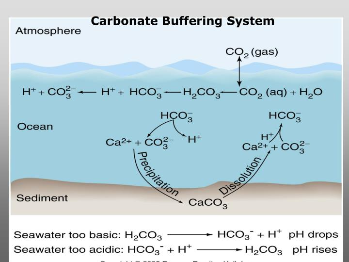 Carbonate Buffering System