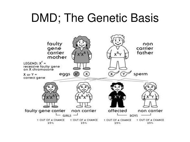 DMD; The Genetic Basis