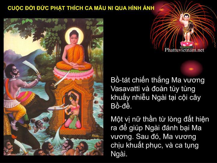 B-tt chin thng Ma vng Vasavatti v on ty tng khuy nhiu Ngi ti ci cy B-.