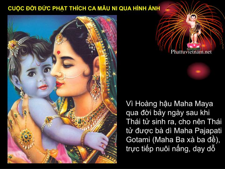 V Hong hu Maha Maya qua i by ngy sau khi Thi t sinh ra, cho nn Thi t c b d Maha Pajapati Gotami (Maha Ba x ba ), trc tip nui nng, dy d