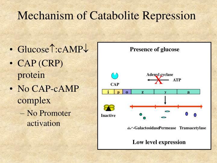 Presence of glucose