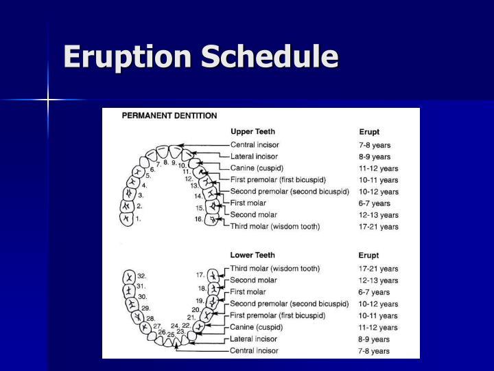 Eruption Schedule