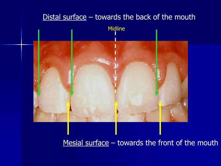Distal surface