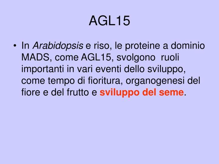AGL15
