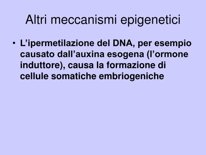Altri meccanismi epigenetici
