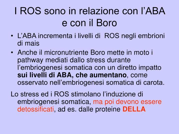 I ROS sono in relazione con l'ABA e con il Boro