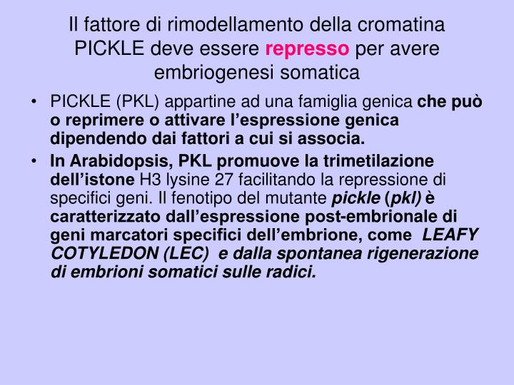 Il fattore di rimodellamento della cromatina PICKLE deve essere