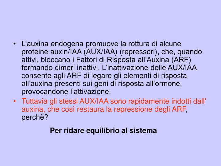 L'auxina endogena promuove la rottura di alcune proteine auxin/IAA (AUX/IAA) (repressori), che, quando attivi, bloccano i Fattori di Risposta all'Auxina (ARF) formando dimeri inattivi. L'inattivazione delle AUX/IAA consente agli ARF di legare gli elementi di risposta all'auxina presenti sui geni di risposta all'ormone, provocandone l'attivazione.