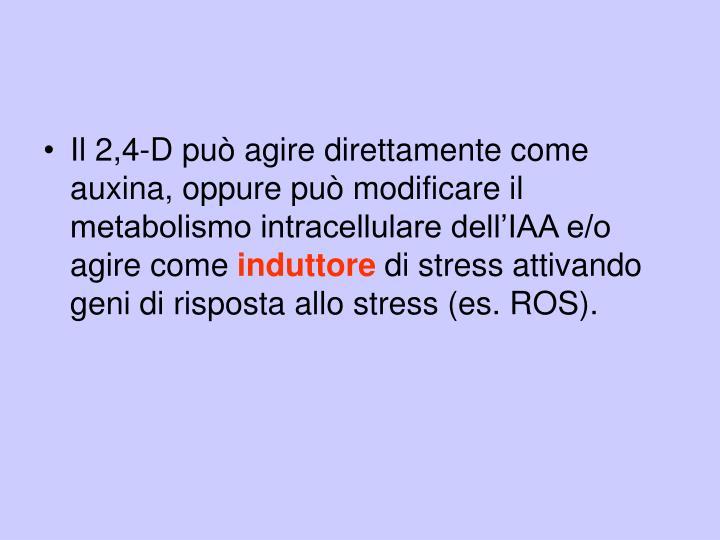 Il 2,4-D può agire direttamente come auxina, oppure può modificare il metabolismo intracellulare dell'IAA e/o agire come