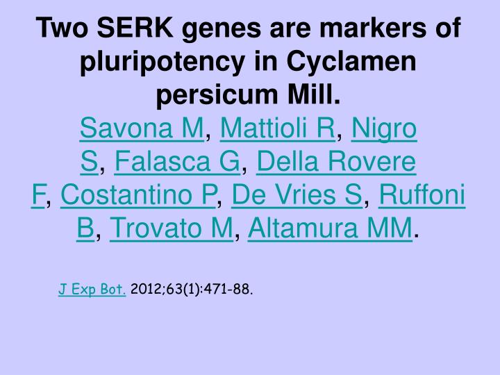 Two SERK genes are markers of pluripotency in Cyclamen persicum Mill.