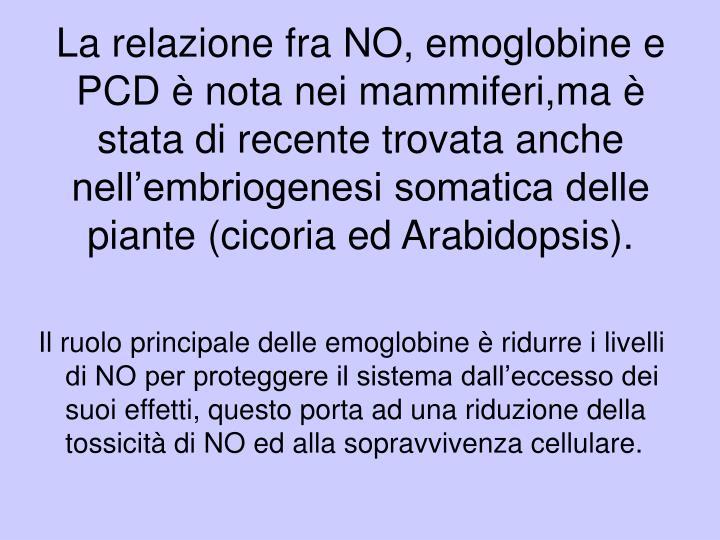 La relazione fra NO, emoglobine e PCD è nota nei mammiferi,ma è stata di recente trovata anche nell'embriogenesi somatica delle piante (cicoria ed Arabidopsis).