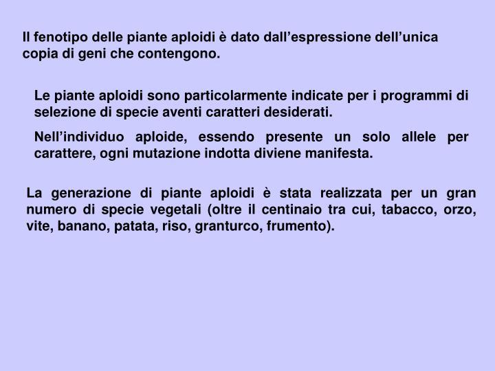 Il fenotipo delle piante aploidi è dato dall'espressione dell'unica copia di geni che contengono.
