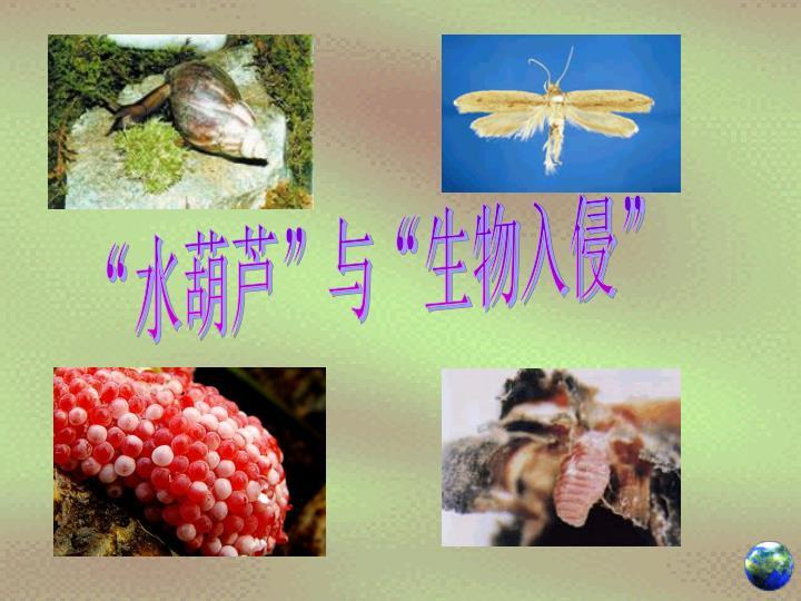 """""""水葫芦""""与""""生物入侵"""""""