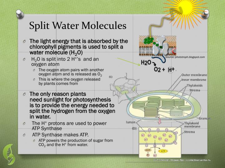 Split Water Molecules