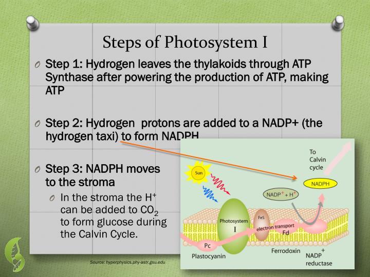 Steps of Photosystem I
