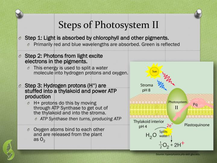 Steps of Photosystem II