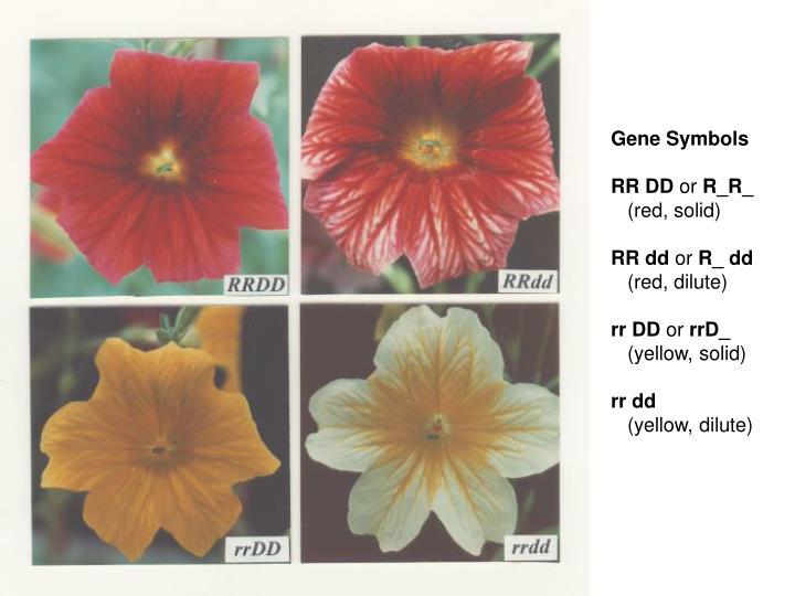 Gene Symbols