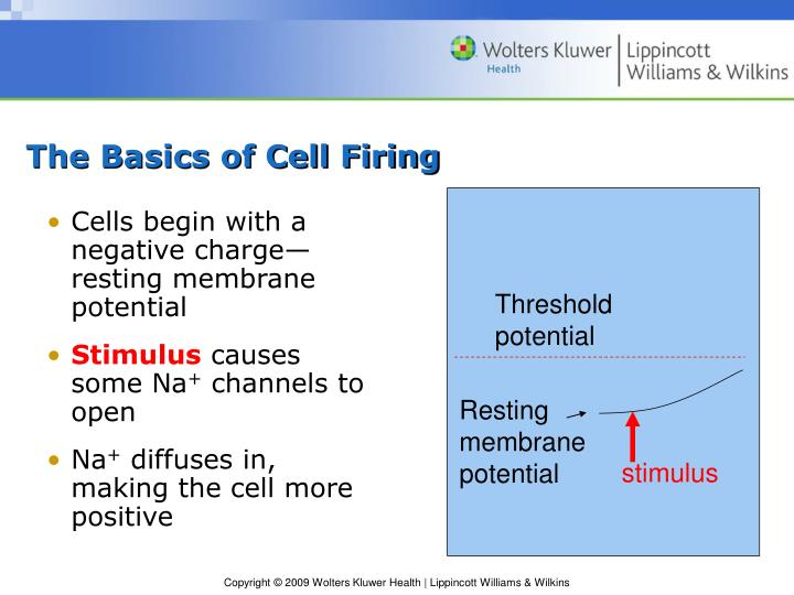 The Basics of Cell Firing