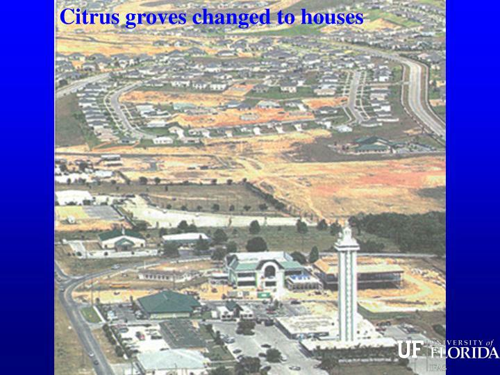 Citrus groves changed to houses