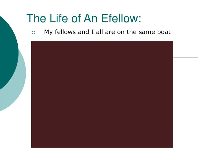 The Life of An Efellow:
