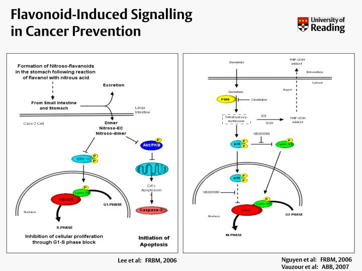 Flavonoid-Induced Signalling