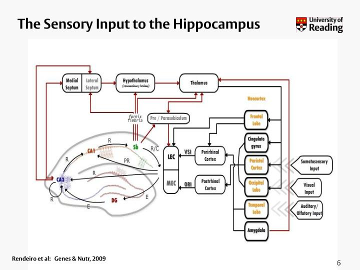 The Sensory Input to the Hippocampus