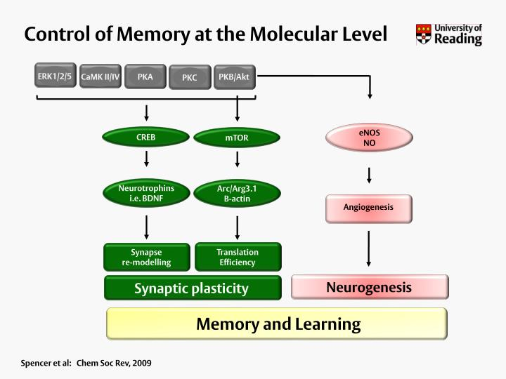 Control of Memory at the Molecular Level