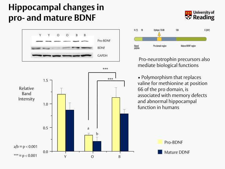 Hippocampal changes in