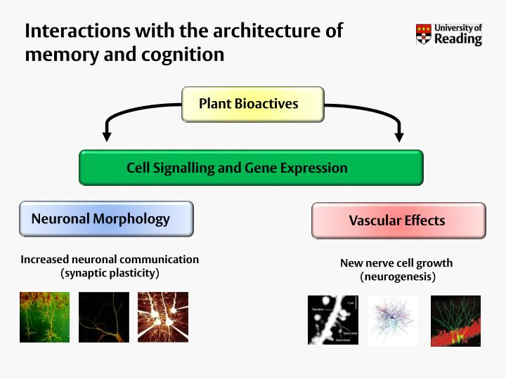 Interactions with the architecture of memory and cognition