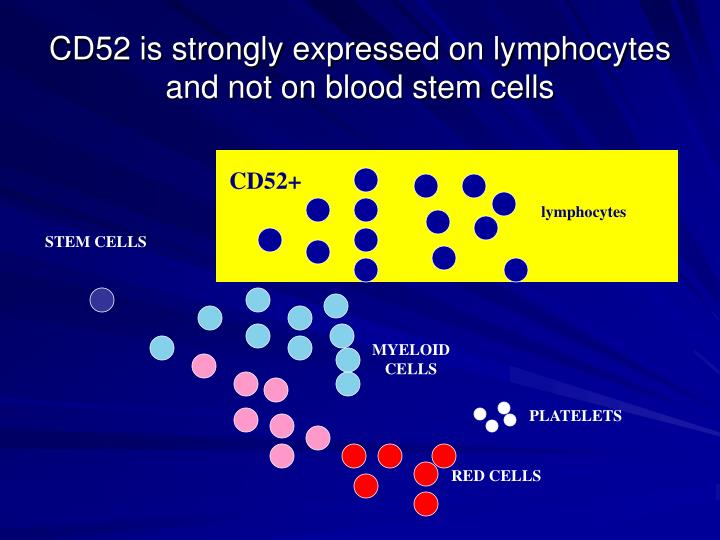 CD52 is strongly expressed on lymphocytes and not on blood stem cells
