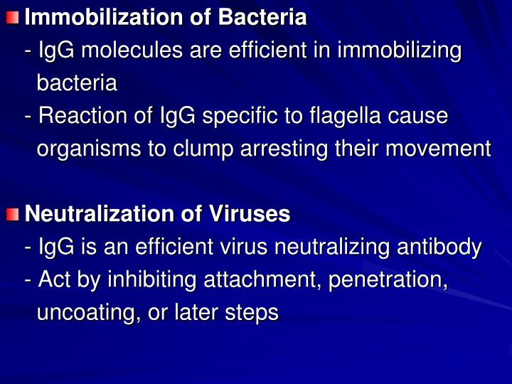 Immobilization of Bacteria
