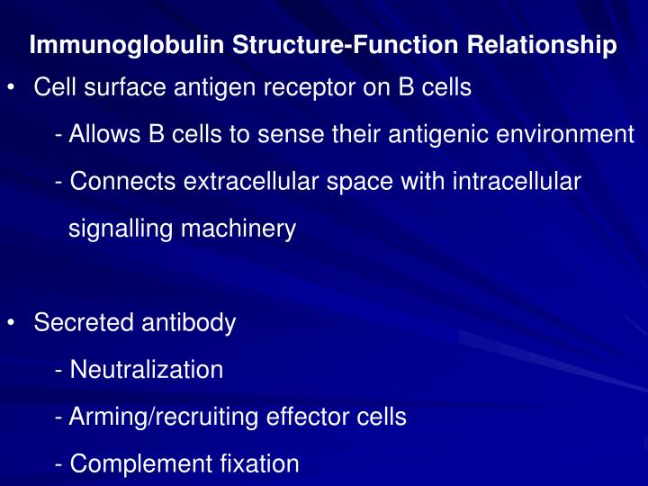 Immunoglobulin Structure-Function Relationship