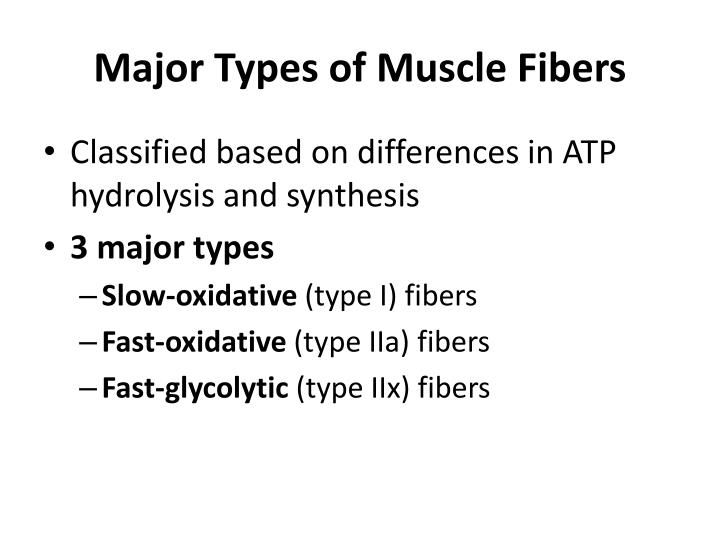 Major Types of Muscle Fibers