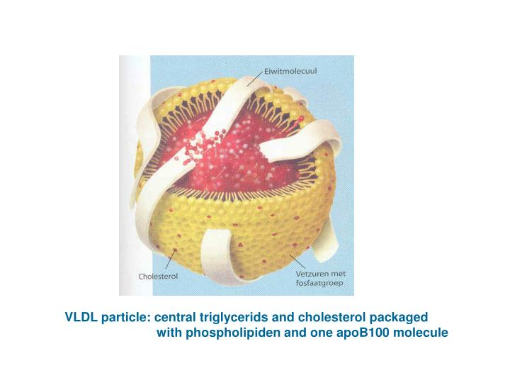 VLDL particle: central triglycerids and cholesterol packaged