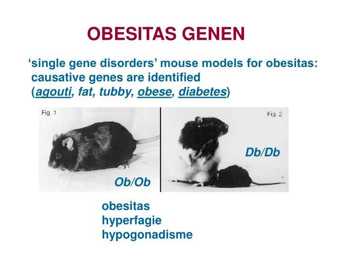 OBESITAS GENEN