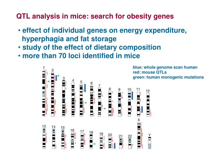 QTL analysis in mice: search for obesity genes