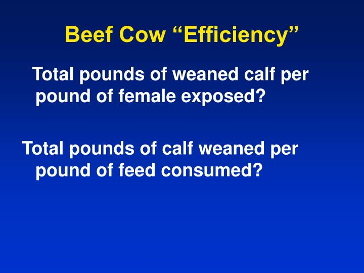 "Beef Cow ""Efficiency"""