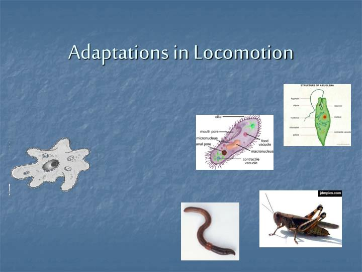 Adaptations in Locomotion