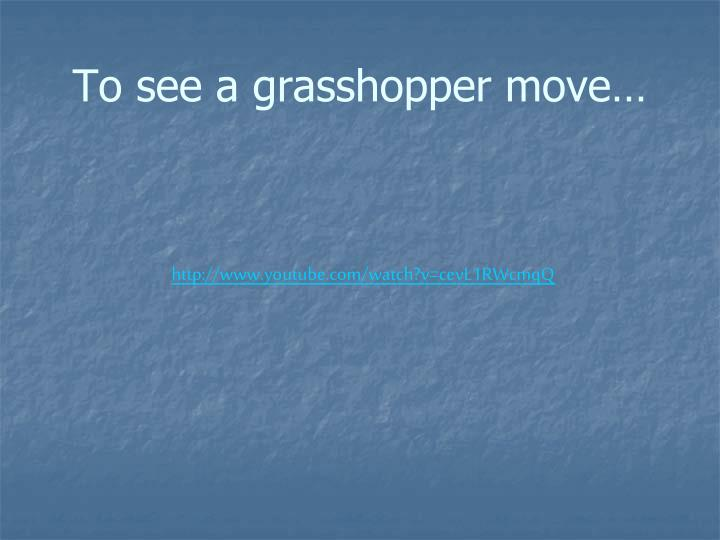 To see a grasshopper move…