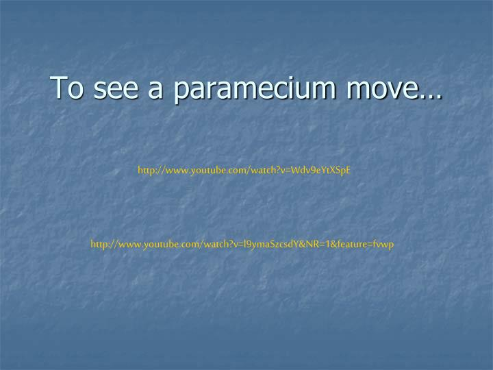 To see a paramecium move…