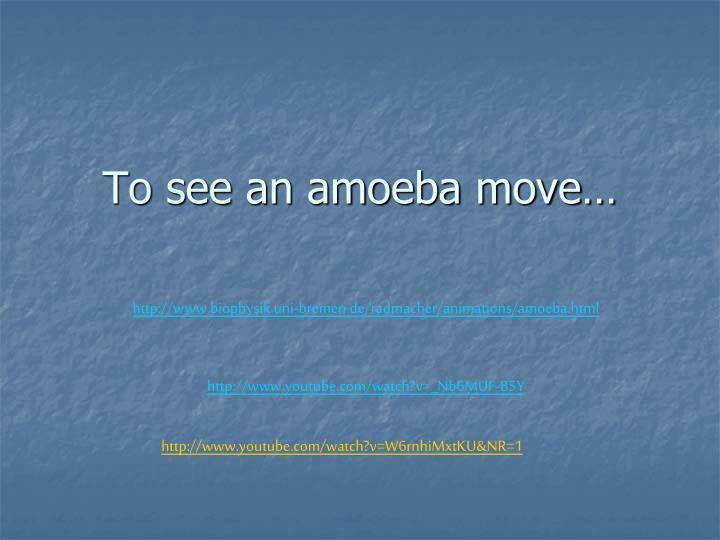 To see an amoeba move…