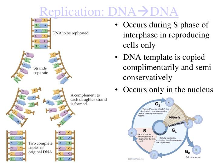 Replication: DNA